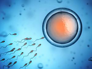 Из чего состоит сперматозоид