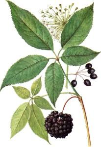 listochki