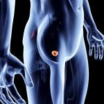 Предстательная железа: размеры в норме